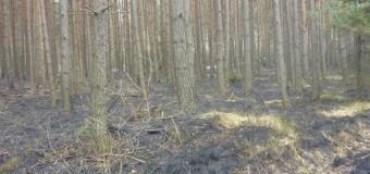 Pożar lasu w Gosławicach