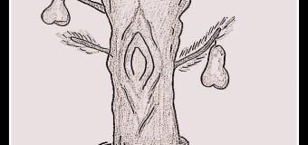 Babski kurnik – odcinek 29 – System migania się