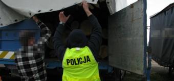 11 ton kradzionych dębowych bali