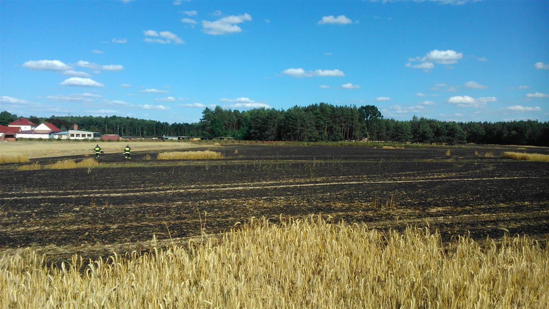 9 hektarów zboża spalone