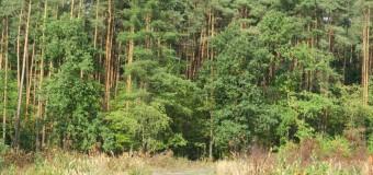 Mieszkaniec Rybnika przyjechał na grzyby i zgubił się w naszych lasach. Pokonał ponad 7 kilometrów
