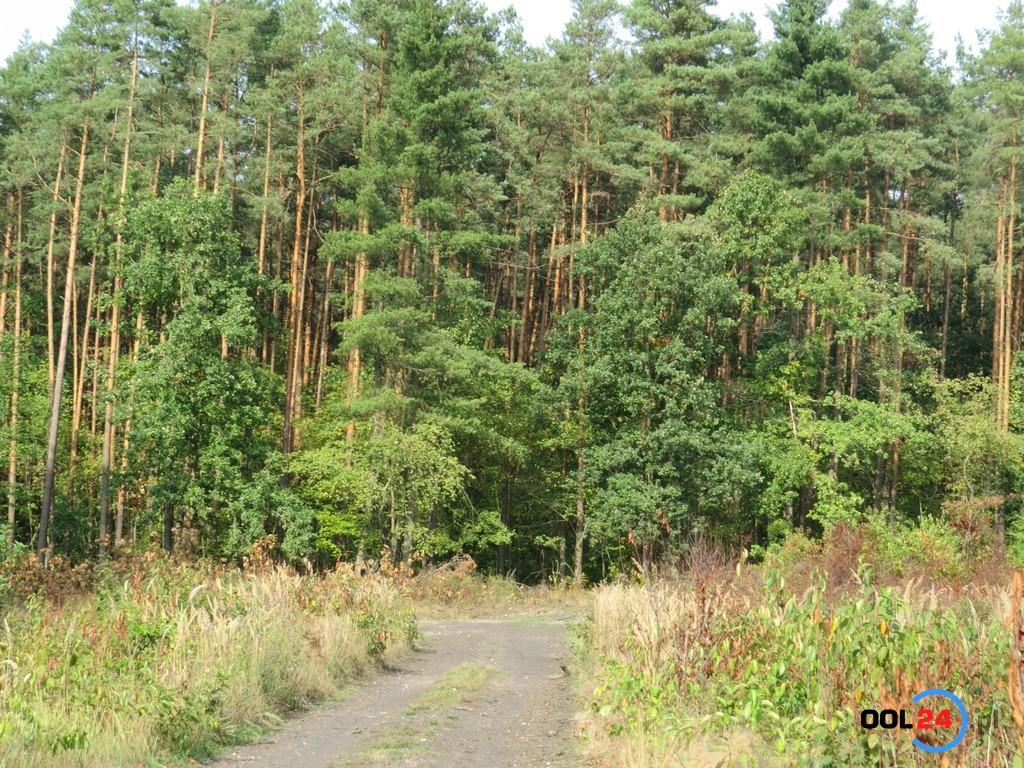 Lasy Państwowe zamknięte. Zakaz wstępu