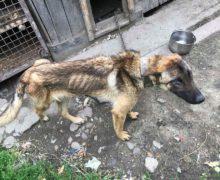 Zagłodzony pies w gminie Rudniki potrzebuje pomocy