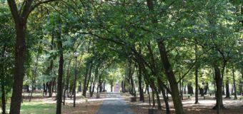 Duży park w Oleśnie ma otrzymać nowe życie