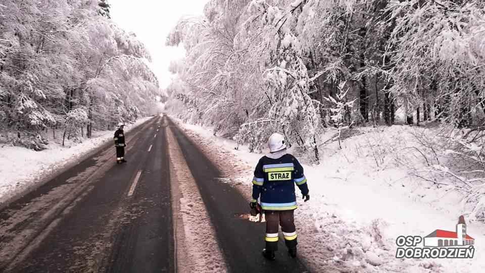Mokry śnieg łamał drzewa nad jezdnią