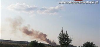 Pożar zboża i ścierniska w Nowej Wsi. W akcji również samolot