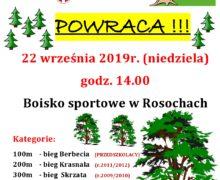 6-ka w lesie – Rosochy