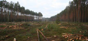 Rozpoczęła się wycinka lasów pod obwodnicę Olesna
