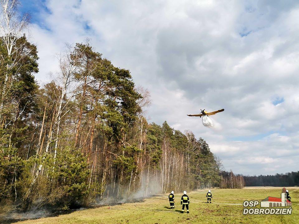 Pożar lasu w Kolejce