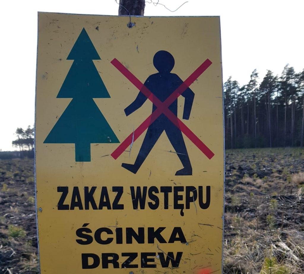 Rusza drugi etap wycinki drzew pod obwodnicę Olesna